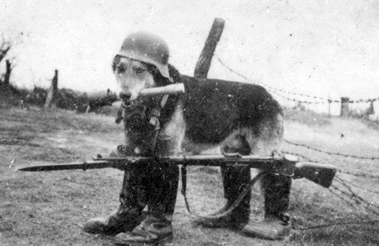 nazi_animals_1939